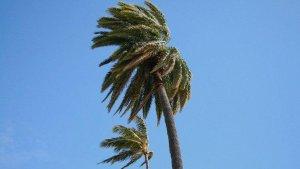 El vent pren el protagonisme meteorològic.