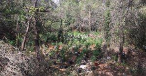 Les plantes de marihuana es trobaven en una zona boscosa i amagada de la Torre de Fontaubella