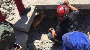 Els voluntaris creixellencs han col·laborat en les tasques de recerca de supervivents després del sisme.