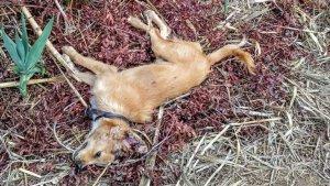 Imatge dels gossos morts