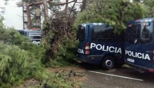 Els arbres han caigut sobre de les furgonetes de la policia espanyola.
