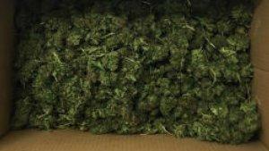 Imatge de la marihuana trobada dins del cotxe