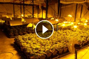 Imatge de l'interior de la plantació de marihuana a Santa Oliva.