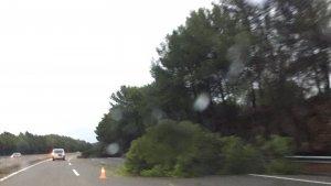 Un arbre ha caigut a l'AP-7 entre Tarragona i Altafulla.