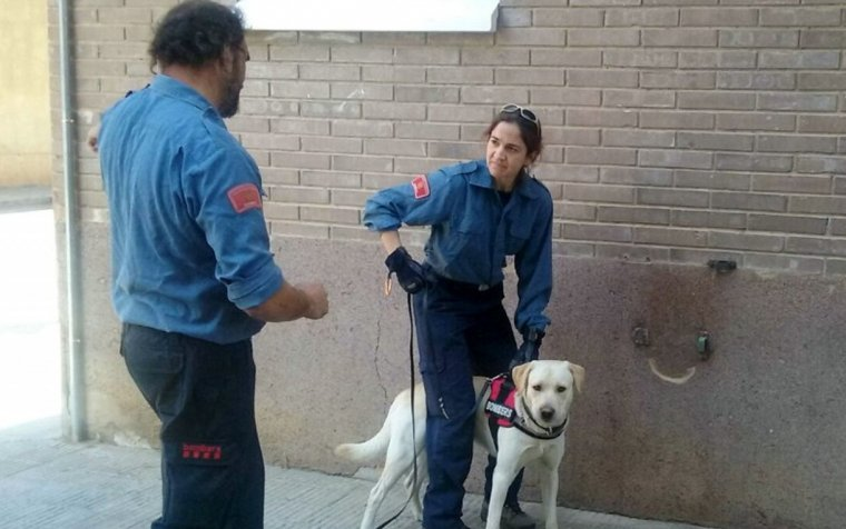 Dos bombers amb un gos durant el seminari internacional de Recerca de Persones amb Gossos de Mantrailing que s'ha fet a Lleida
