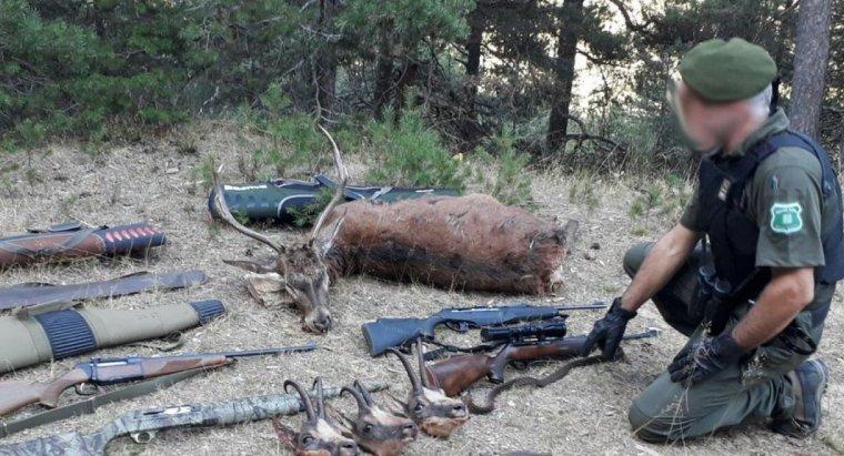 Imatge del material comissat pels Agents Rurals; tres caps d'isard, un cérvol, tres rifles, una escopeta i un ganivet