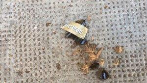 Botelles impactades sobre el col·legi Lluis Vives de València