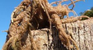 Imatge d'una esponja al pantà d'Escales
