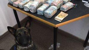 La Unitat Canina ha ajudat a interceptar els diners