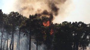 Un incendi forestal a Palafolls obliga a tallar la B-682 al seu pas per Blanes.