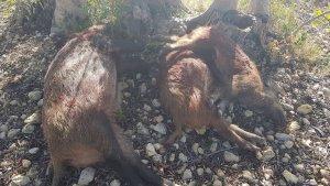 Una usuària ha trobat els cossos abandonats mentre passejava per la zona