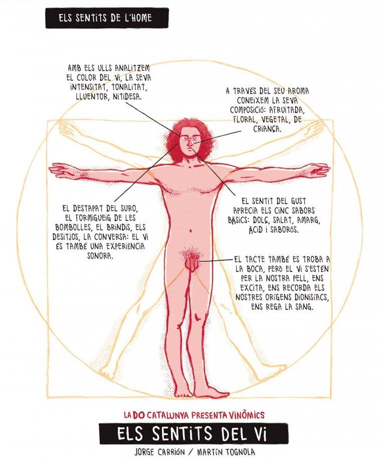 Els sentits del vi, Vinòmic