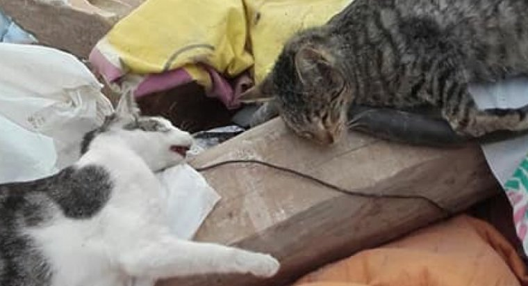 Imatge dels dos gats sepultats