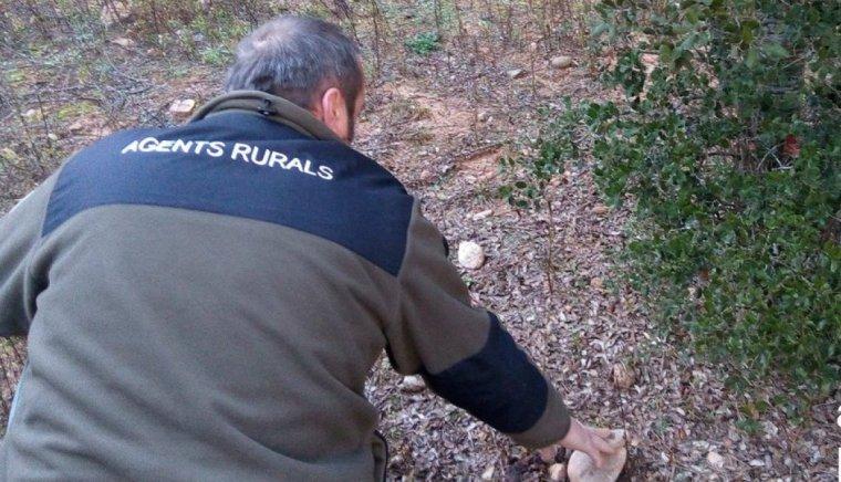 Un agent rural durant una inspecció en una zona tofonera