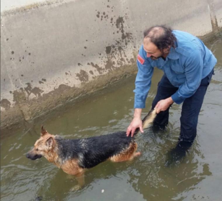Imatge del rescat de l'animal