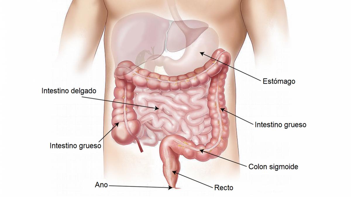 Prolapso rectal: síntomas, causas y tratamiento