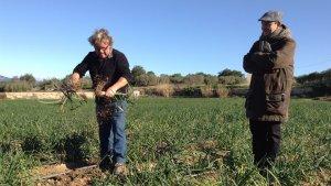 Durant la visita es podran degustar calçots cultivats a la mateixa finca.
