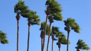 Les fortes ventades es fan notar a diverses zones del Camp de Tarragona.