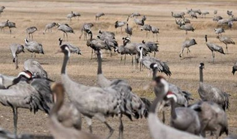 8è cens d'ocells hivernants Delta del Llobregat