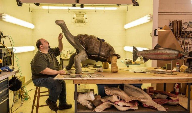 Taxidermista trabajando con el cuerpo de una tortuga.
