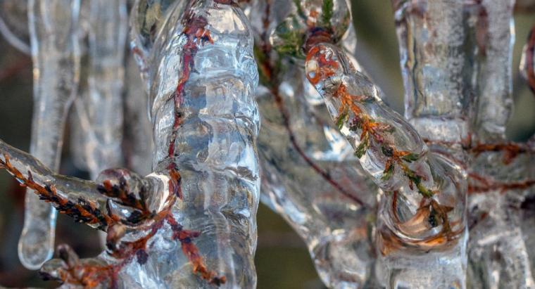 Un arbre congelat al Pallars