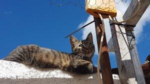 Alcover treballarà per esterilitzar els gats que són al carrer.