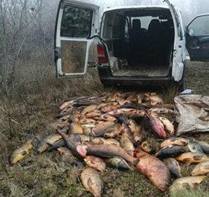 Imatge dels peixos pescats