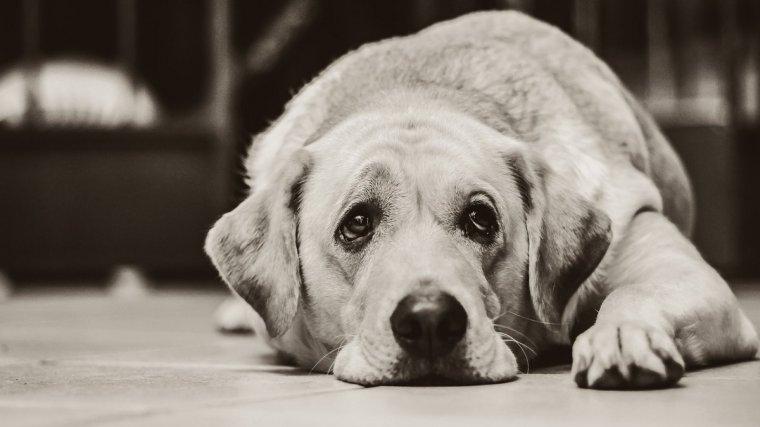 Cuidar a un perro cuando se encuentra enfermo es la mejor forma de demostrarle tu amor incondicional.