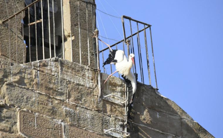 Imatge de la cigonya atrapada a Sant Martí