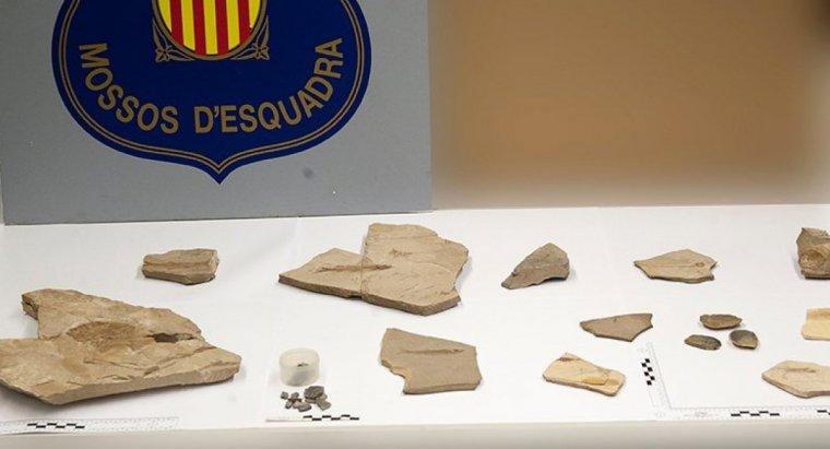 Pla obert on es poden veure el conjunt de fòssils de peixos de cretaci provinents d'una pedrera de Vilanova de Meià que havien estat robats i han recuperat els Mossos d'Esquadra