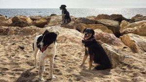 Els gossos també volen anar a la platja.