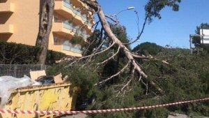 Un arbre ha caigut a Salou sobre un cotxe sense causar ferits.