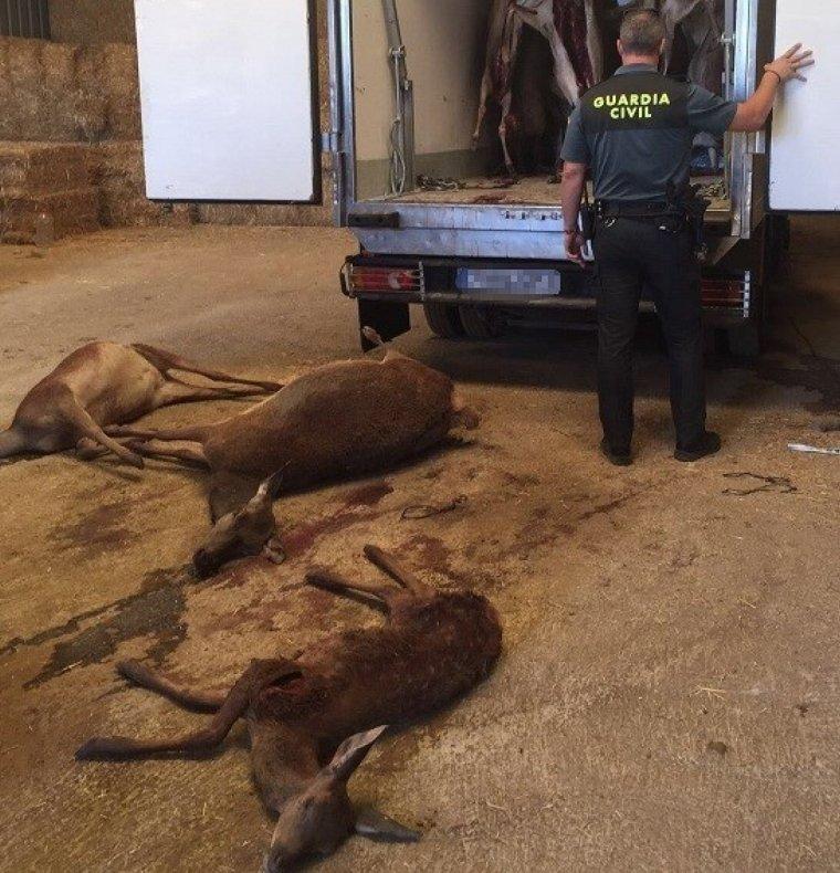 Els cérvols trobats pel Seprona