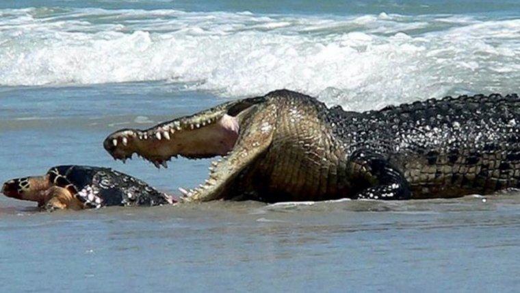 Las 10 playas que debes evitar a toda costa.
