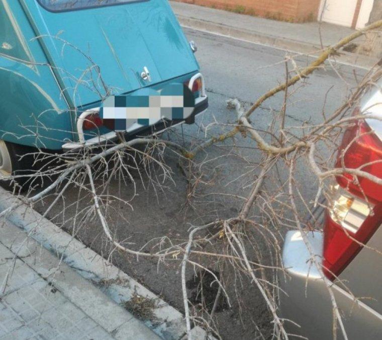 Un arbre caigut a Cerdanyola durant la passada setmana
