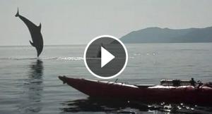 Dofins al Cap de Creus