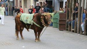 Imagen de los 'toros ensogaos' de Beas de Segura