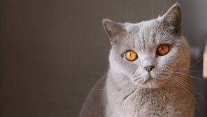 Te traemos una gran lista de nombres de gatos, tanto para hembras como para machos. Elige tu favorito.