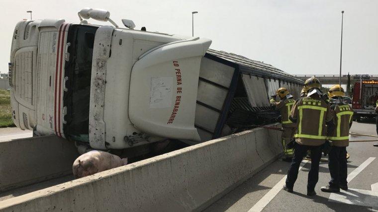 Imatge del camió que transportava porcs bolcat a Vila-seca.