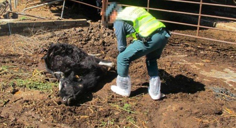 Imatge d'un animal mort a la granja
