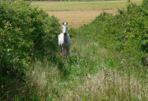 El cavall perdut per Algerri