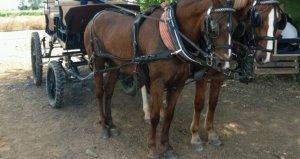 Imagen de archivo de un coche de caballos
