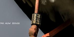 La identificació de la cigonya