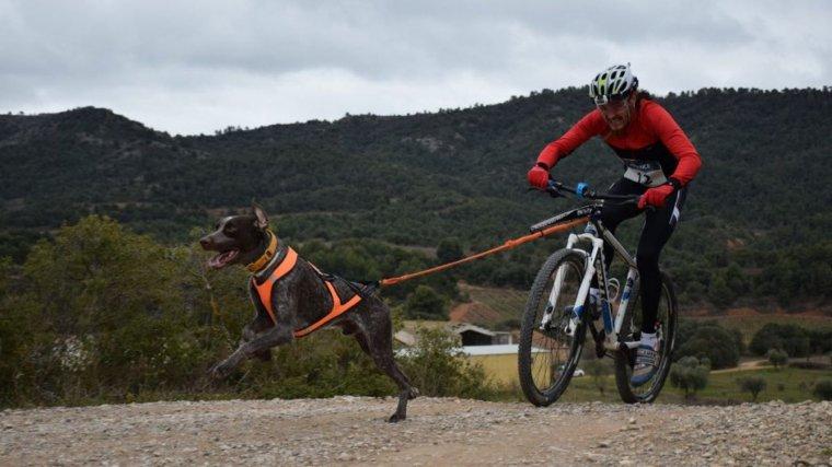 Fa tres anys que Gonzàlez va començar a practicar 'bikejoring' i a competir.