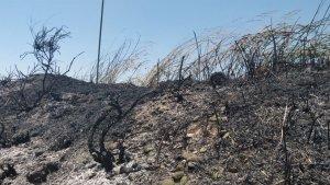 Imatge del terreny cremat per l'incendi d'avui