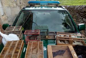 Imatge dels ocells en les gàbies