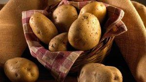 Patates de la IGP Prades