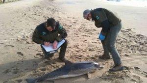 Agents Rurals identificant el dofí.