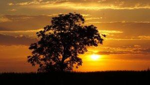 El sol dominarà aquest divendres tret d'alguns núvols matinals