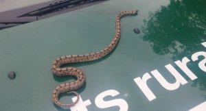 Imatge de la serp
